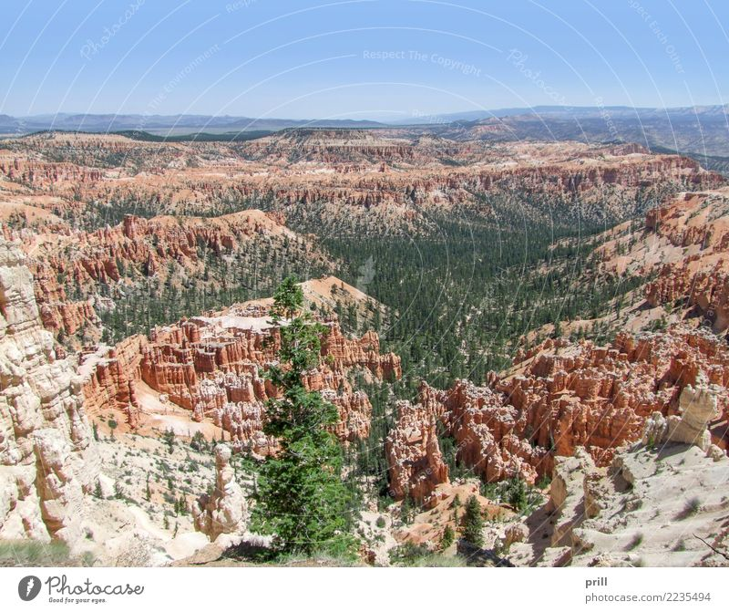 Bryce Canyon National Park Tourism Nature Sand Tree Rock Stone Brown Red Utah USA Hoodoos Rock formation Erosion Weathered Sandstone Sediment rock needle