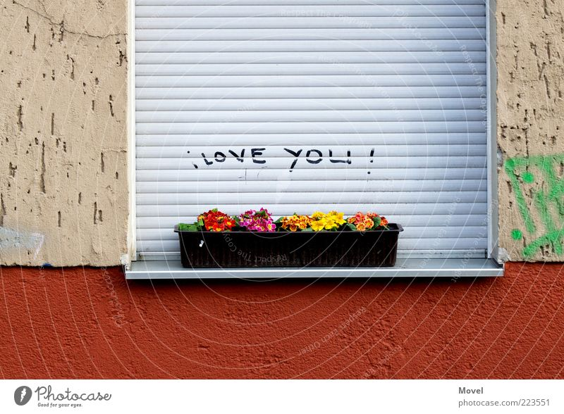 I LOVE YOU! Flower House (Residential Structure) Wall (barrier) Wall (building) Facade Window Stone Concrete Sign Characters Graffiti Fragrance Kitsch Gray Red