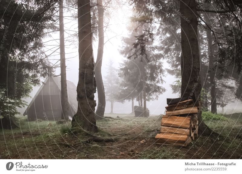Forest hut in the fog Vacation & Travel Camping Sun Environment Nature Landscape Sunlight Autumn Fog Plant Tree Grass Wild plant Wood Relaxation Creepy Natural