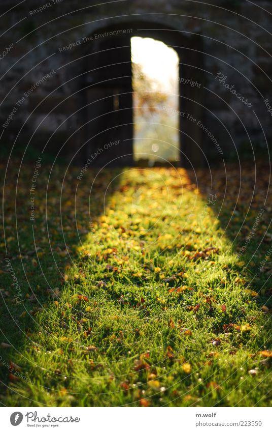 Cellar Door Garden Environment Nature Sunlight Autumn Beautiful weather Grass Moss Park Meadow Wolfhagen Deserted Wall (barrier) Wall (building) Yellow Green