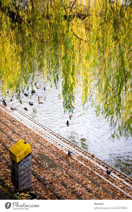 Natural garlands Environment Nature Plant Autumn Tree Leaf Foliage plant Wild plant Pasture Weeping willow Lakeside lake of fire Animal Wild animal Duck Mallard