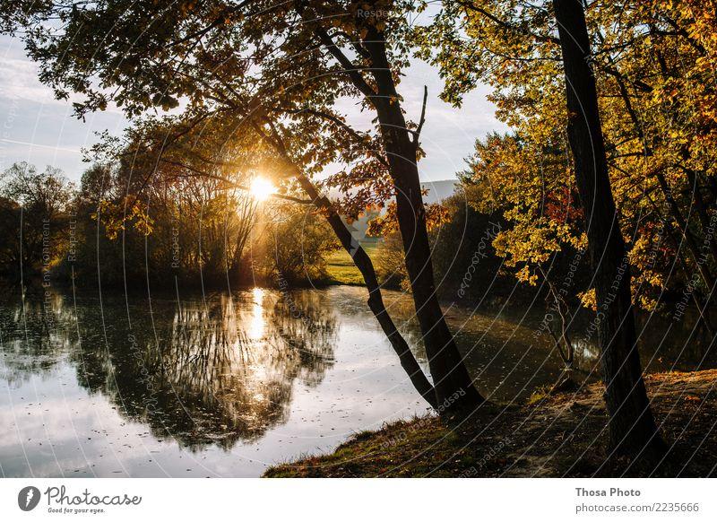 Nature Beautiful Sun Landscape Tree Yellow Autumn Coast Lake Brown Wild Gold Idyll Beautiful weather Evening sun Slovakia
