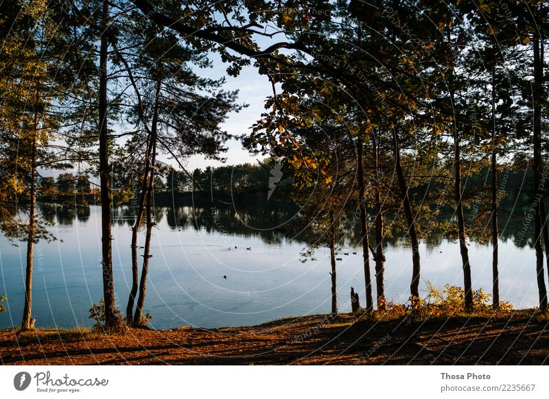 Slovakia Environment Landscape Weather Forest Lake Wood Authentic Natural Dry Brown Yellow Gold Autumn Tree Idyll Water Coast Evening sun Leaf Blue Sky