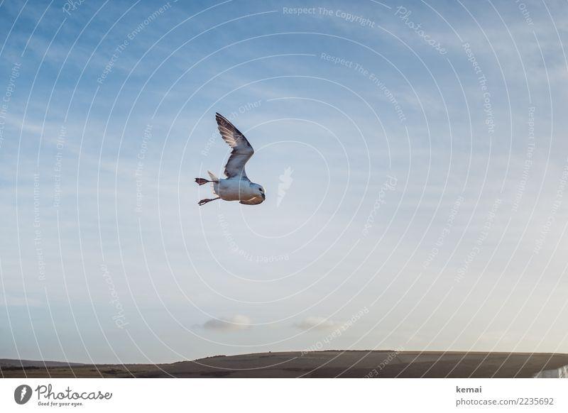 Sky Nature Blue Landscape Animal Clouds Calm Far-off places Life Coast Exceptional Freedom Bird Contentment Elegant