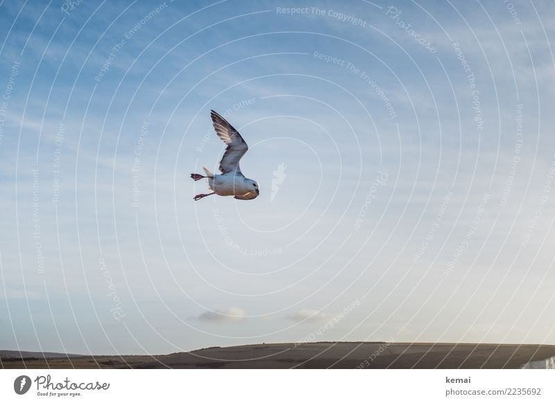 To be free like the birds that fly past me Elegant Life Harmonious Well-being Contentment Calm Adventure Far-off places Freedom Nature Landscape Animal Sky