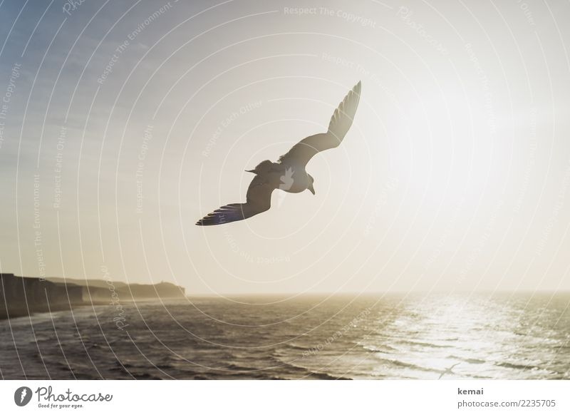 Airborne. Life Well-being Relaxation Calm Adventure Far-off places Freedom Landscape Water Beautiful weather Waves Coast Ocean Island England Cliff Flying