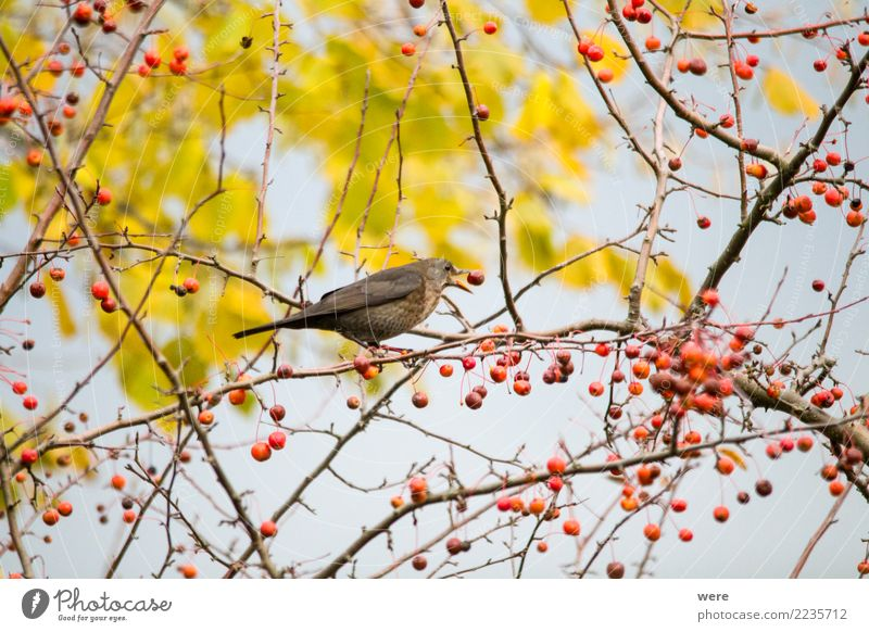 Nature Tree Animal Eating Garden Bird Park Wild animal Authentic Bushes Wing Apple To feed