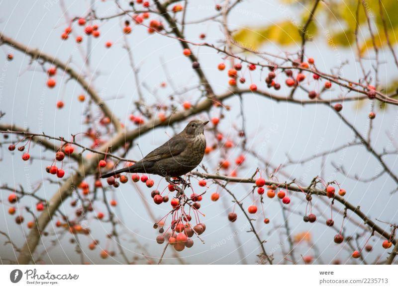 Landscape Tree Animal Eating Garden Bird Wild animal Sit Bushes To feed