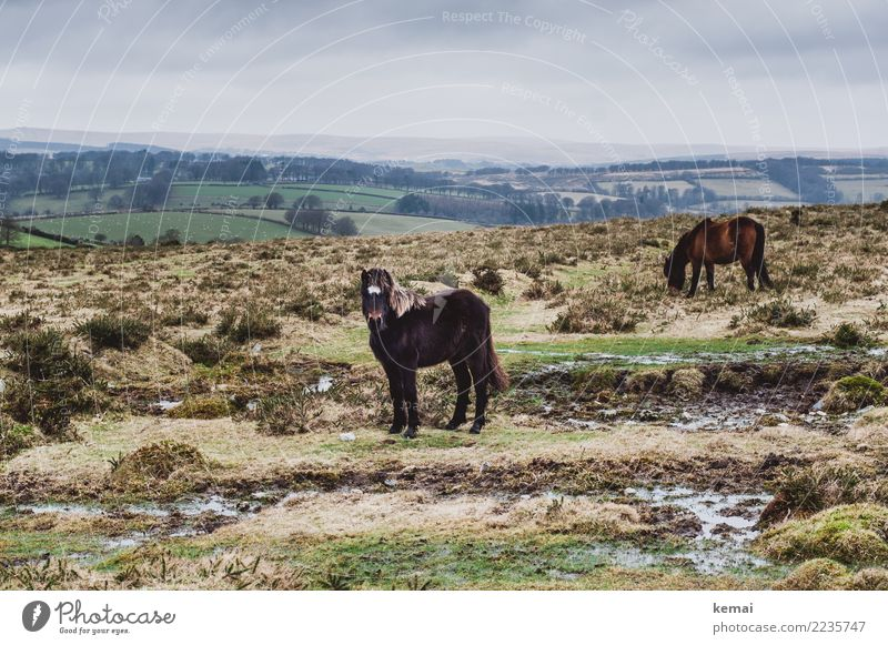 Dartmoor Pony Relaxation Calm Leisure and hobbies Vacation & Travel Trip Adventure Far-off places Freedom Environment Nature Landscape Animal Sky Clouds