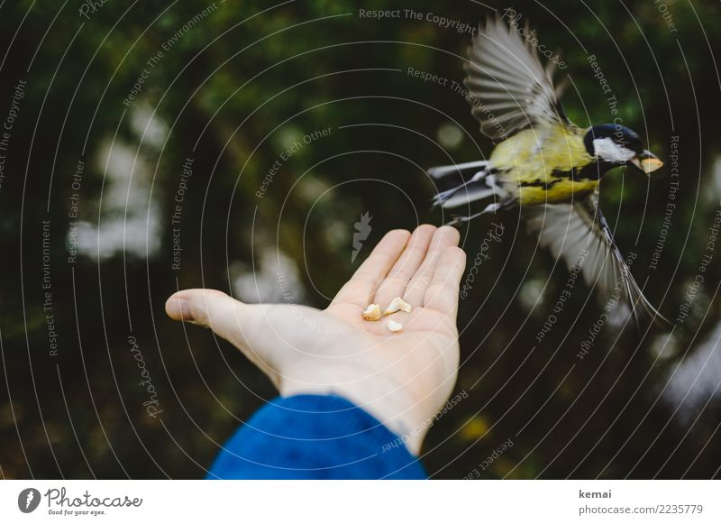 Human being Hand Animal Forest Life Playing Exceptional Bird Flying Friendship Leisure and hobbies Park Wild animal Authentic Adventure Joie de vivre (Vitality)