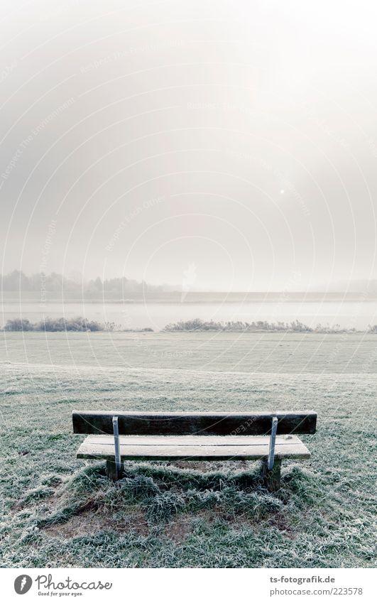 Nature Sun Winter Cold Snow Meadow Grass Landscape Wood Environment Air Park Lake Ice Horizon Fog