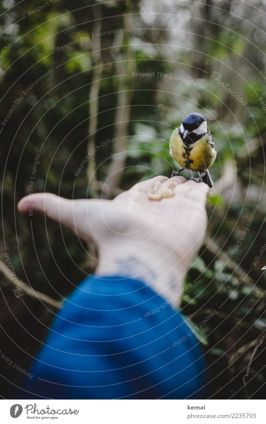 Human being Hand Animal Calm Forest Life Playing Exceptional Bird Trip Leisure and hobbies Contentment Park Wild animal Sit Authentic