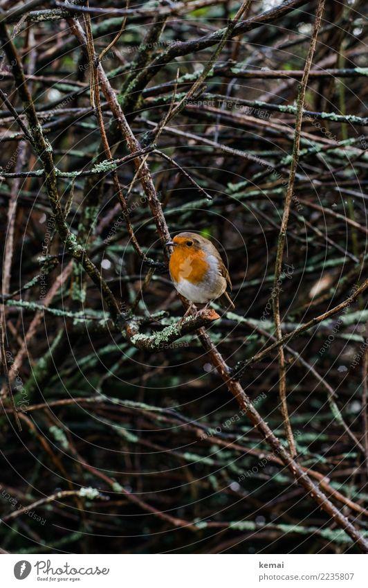 Nature Plant Animal Winter Small Bird Rain Wild animal Sit Authentic Bushes Cute Wet Trust Watchfulness Sympathy