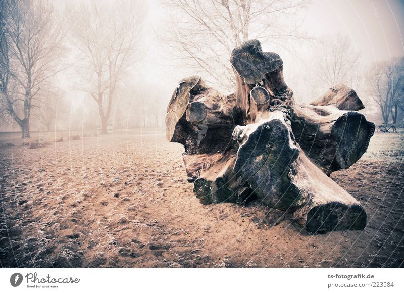 Stranded I Environment Nature Landscape Plant Elements Sand Winter Weather Fog Ice Frost Tree Forest Beach Gigantic Large Cold Brown Tree trunk Tree stump Root
