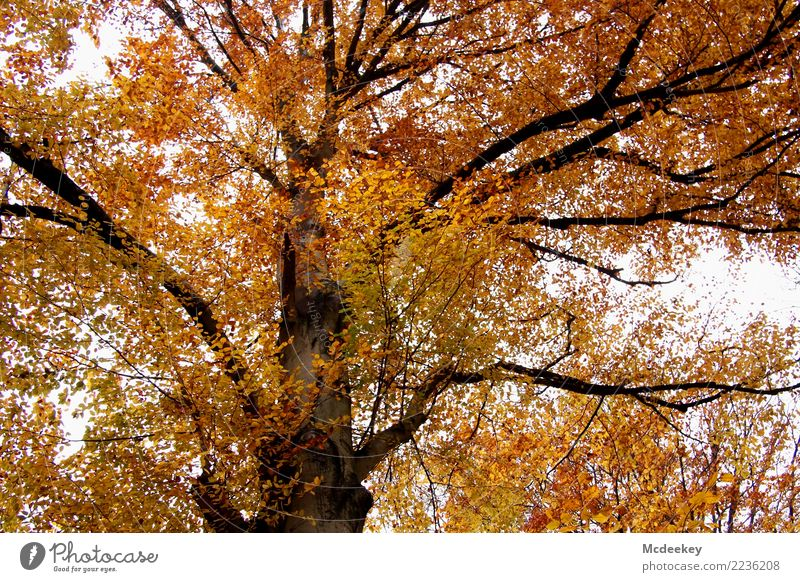 Sky Nature Plant Beautiful Green White Landscape Tree Red Leaf Clouds Forest Black Yellow Environment Autumn