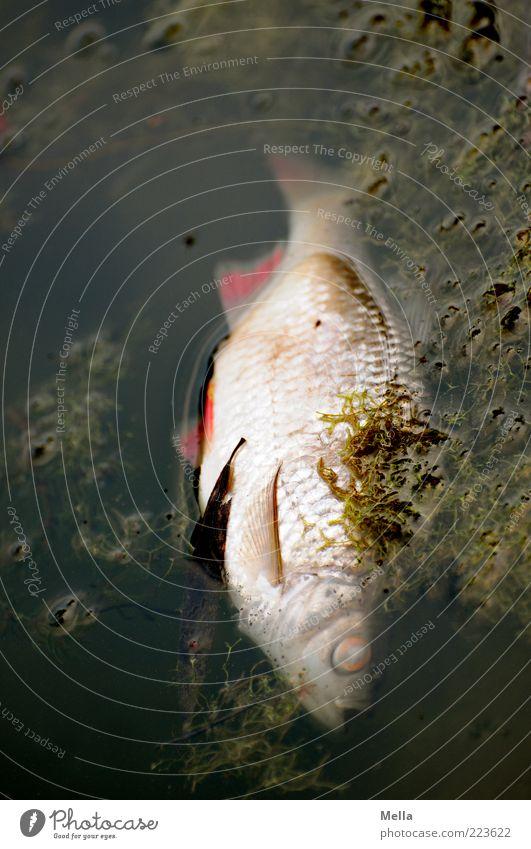 Nature Water Animal Environment Dark Eyes Death Lake Time Lie Natural Dirty Fish Gloomy Transience