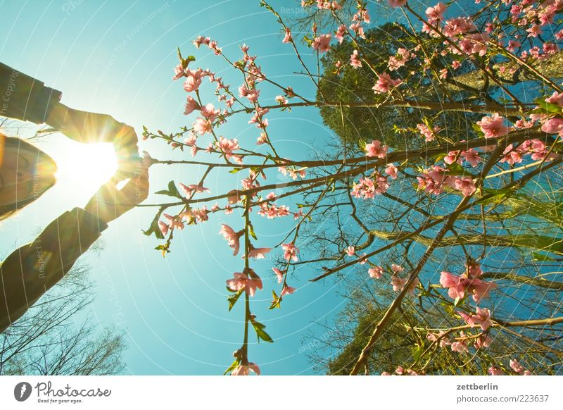 Photos in spring Trip Freedom Human being Woman Adults Hand 1 Environment Nature Bushes Growth April Spring Take a photo To go for a walk Blossom Blossoming