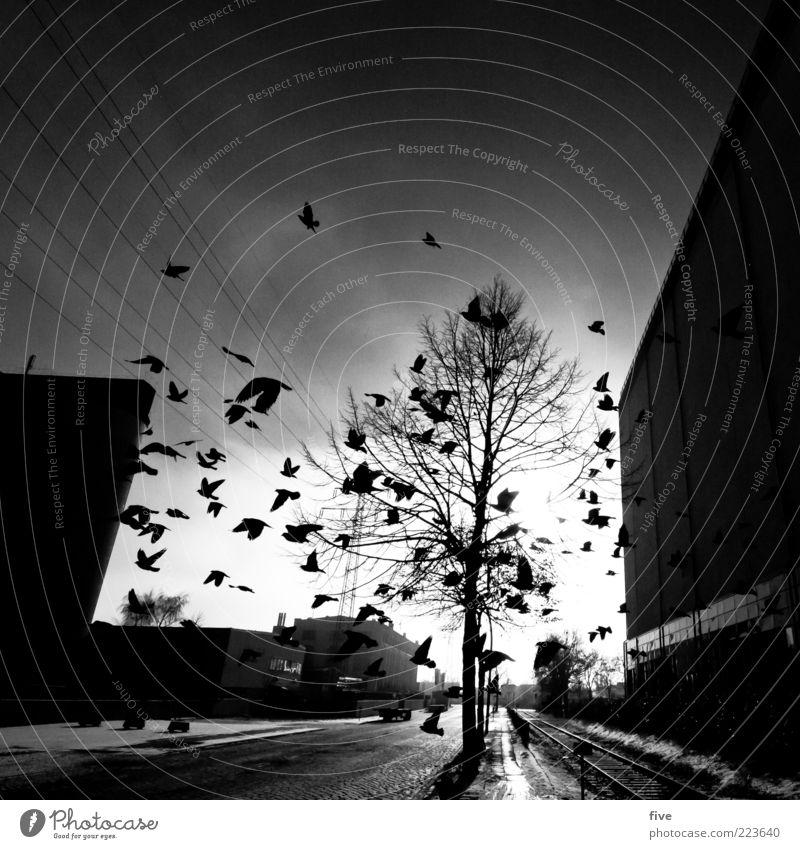 Sky City Tree Winter Animal Street Dark Wall (building) Lanes & trails Wall (barrier) Moody Building Bird Flying Transport Hamburg
