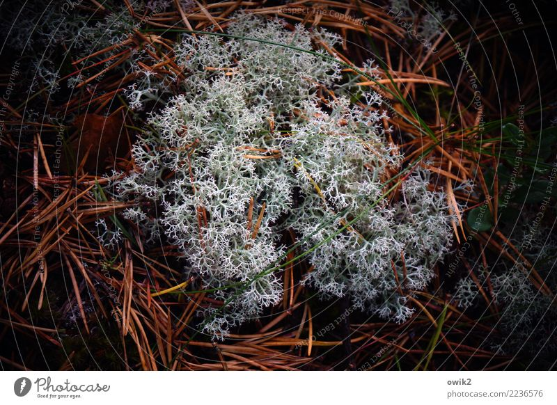 soft coral Environment Nature Plant Elements Lichen Fir needle Woodground Forest Growth Authentic Together Point Under Calm Life Idyll Arrangement Reticular