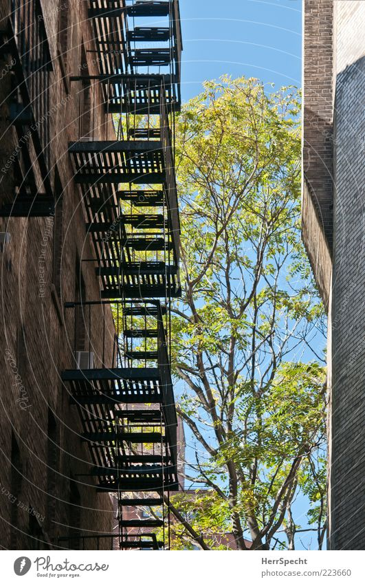 Tree Leaf House (Residential Structure) Wall (building) Wall (barrier) Metal Facade Stairs Beautiful weather Blue sky Twigs and branches Lanes & trails Building Brick wall Escape route Fire ladder