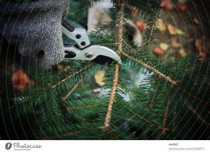 grief work Gardening Cemetery Ledger Hand Fir branch fir green Fir needle Gloves pruning shears Work and employment Dark Cold Patient Diligent Sadness Grief