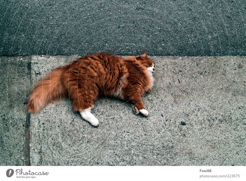 Listening on the pavement Environment Summer Small Town Places Pet Cat 1 Animal Concrete Line Observe Discover Lie Playing Brash Funny Rebellious Beautiful Blue