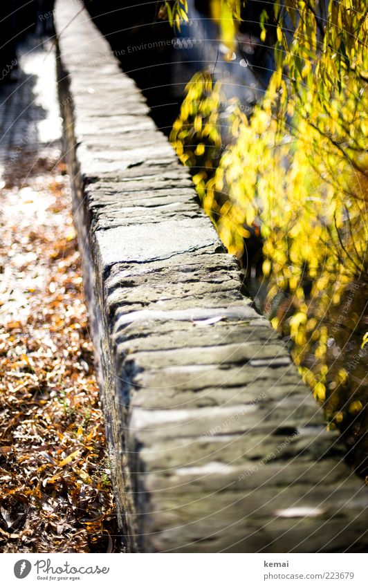 Nature Old Tree Plant Sun Leaf Autumn Wall (building) Environment Garden Wall (barrier) Stone Park Bright Bushes Illuminate