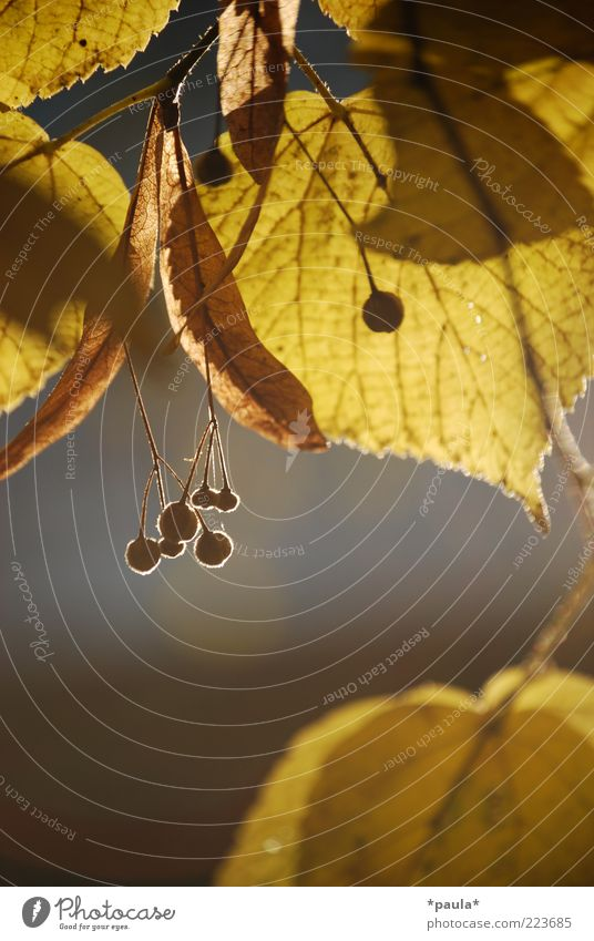 Nature Beautiful Plant Leaf Calm Yellow Autumn Gray Dream Brown Small Growth Natural Authentic Uniqueness Transience