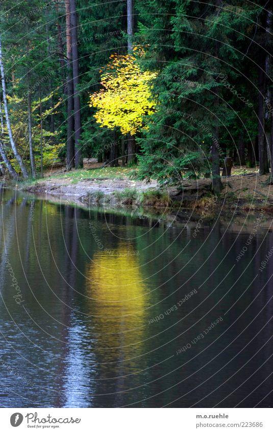 Nature Tree Beautiful Plant Leaf Yellow Forest Autumn Landscape Environment Lake Romance Transience Decline Seasons Lakeside