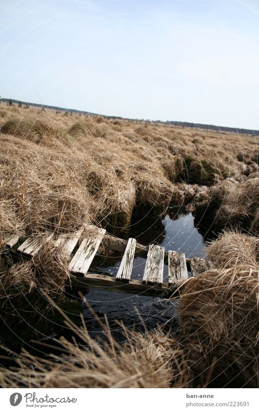 Water Old Calm Far-off places Black Meadow Landscape Grass Wood Moody Earth Horizon Bridge Broken Change End