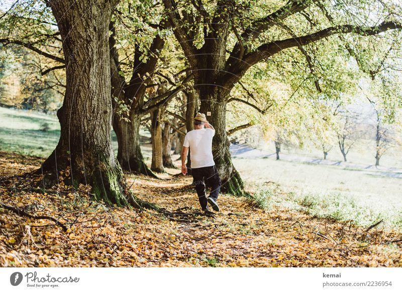 Human being Nature Man Tree Relaxation Calm Lifestyle Adults Warmth Autumn Senior citizen Lanes & trails Freedom Trip Going