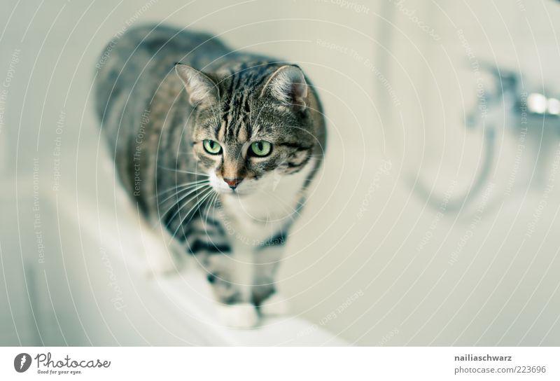 cat bath Living or residing Flat (apartment) Bathroom Animal Pet Cat Animal face Domestic cat 1 Stand Esthetic Clean Brown Gray Green Colour photo Interior shot