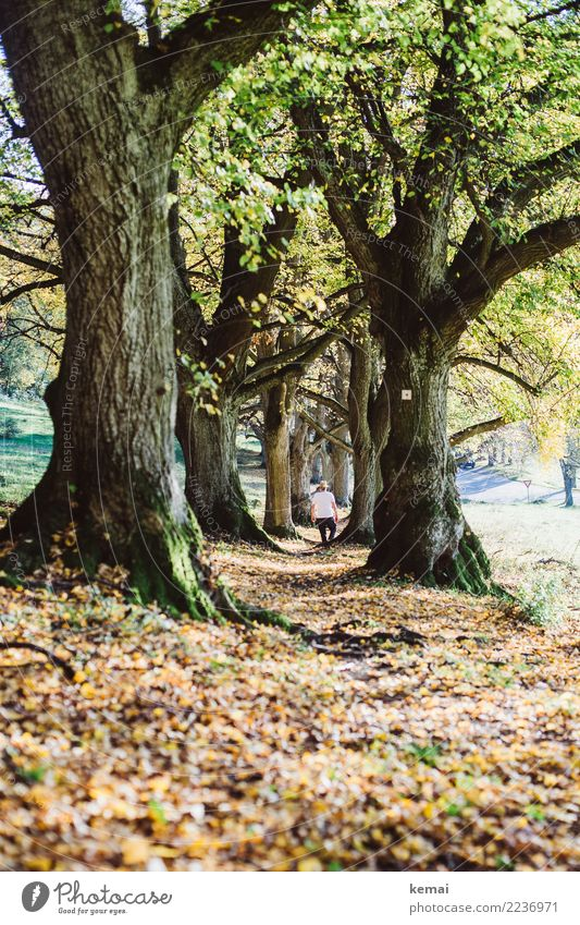 Human being Nature Man Plant Beautiful Tree Relaxation Leaf Adults Life Warmth Autumn Lanes & trails Freedom Trip Going