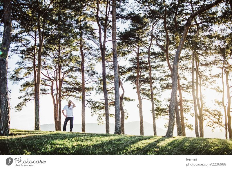 Daddy cool Lifestyle Style Well-being Contentment Calm Leisure and hobbies Adventure Human being Masculine Man Adults 1 Landscape Beautiful weather Tree Forest