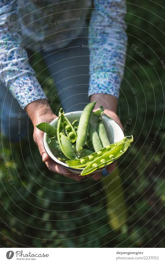 Harvest pea plants Woman Nature Plant Summer Green Sun Hand Leaf Adults Garden Growth Fresh Vegetable Farm Mature