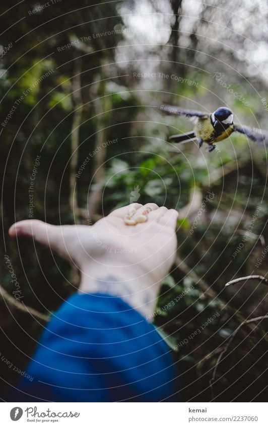 Cautious approach Leisure and hobbies Playing Adventure Human being Hand Palm of the hand 1 Environment Nature Animal Bushes Park Forest Wild animal Bird Wing