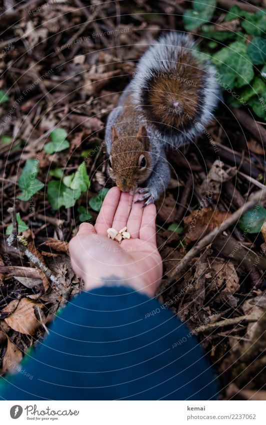 Finger food. Nut Leisure and hobbies Adventure Human being Hand Fingers Palm of the hand 1 Nature Animal Leaf Park Wild animal Animal face Pelt Squirrel Tails