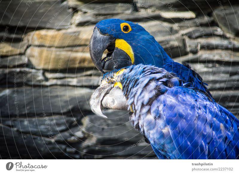 Animal Bird Pair of animals Wild animal Wing Cleaning Animal face Crawl Macaw