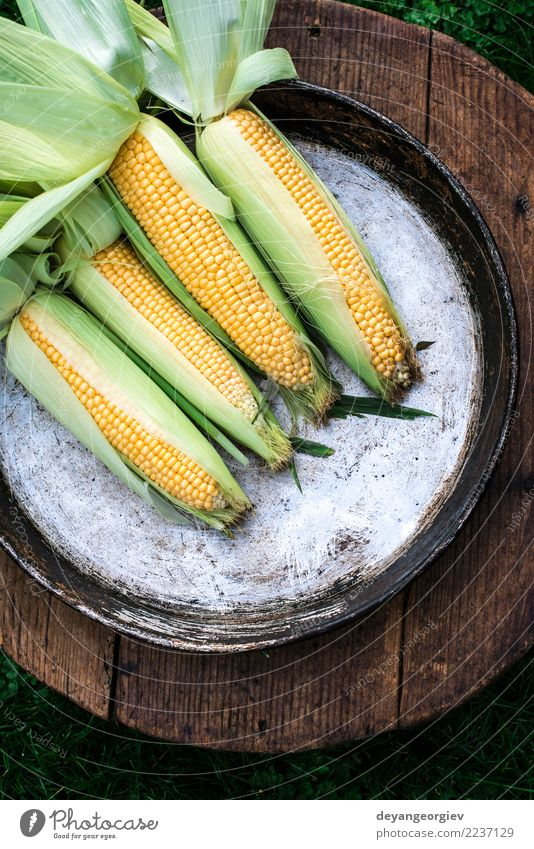 Raw corn in the garden Summer Green Leaf Yellow Natural Wood Garden Nutrition Gold Fresh Vegetable Farm Harvest Agriculture Mature Rustic