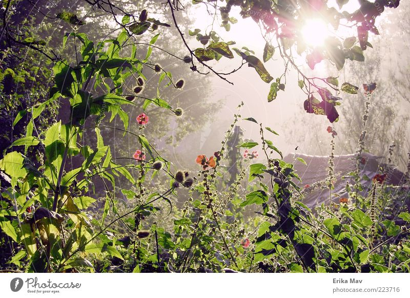 light at the end of the jungle Nature Landscape Plant Summer Leaf Blossom Hollyhock Garden Forest Fresh Moody Safety (feeling of) Beautiful Calm Hope Loneliness