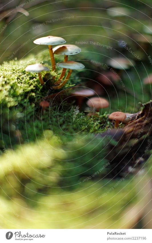 #AS# without moss... # Art Work of art Esthetic Mushroom Woodground Exterior shot Macro (Extreme close-up) Autumn Clearing Edge of the forest Glade Moss