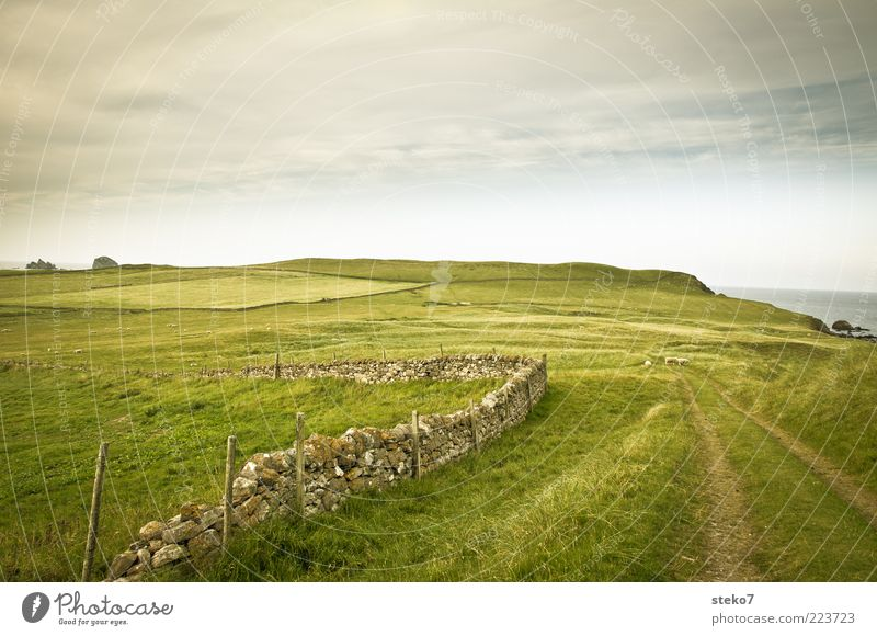 Off to the countryside Landscape Grass Meadow Field Hill Coast Wall (barrier) Wall (building) Sheep 3 Animal Loneliness Vacation & Travel Far-off places