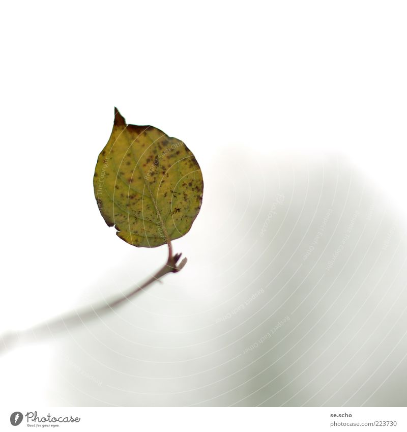 Nature Green Beautiful Plant Leaf Calm Loneliness Autumn Environment Twig Last Rachis Foliage plant Autumn leaves Dappled To dry up