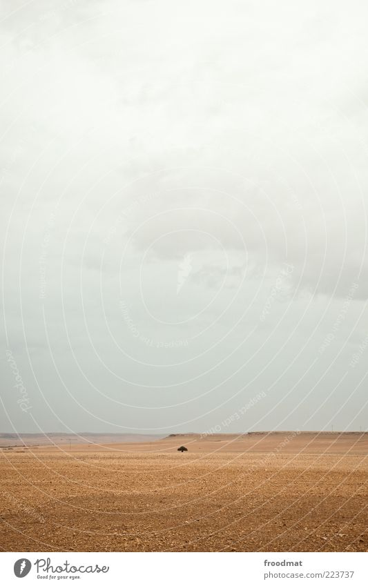 Sky Nature Tree Clouds Calm Far-off places Loneliness Landscape Gray Environment Gloomy Uniqueness Desert Infinity Dry Bad weather