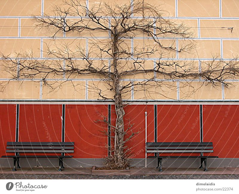 tree cross Tree Wall (building) Symmetry Winter Aschaffenburg Bench Branch pompejanum