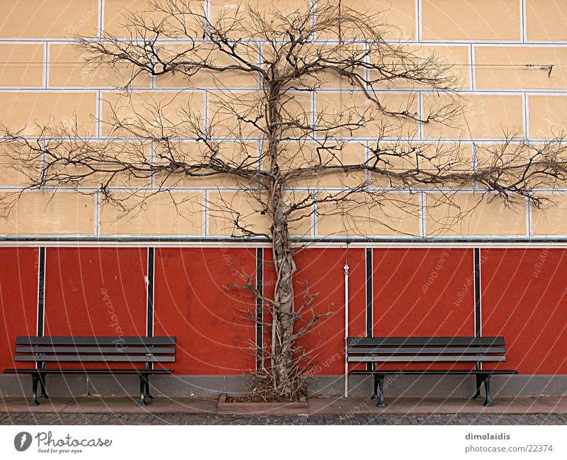 Tree Winter Wall (building) Bench Branch Symmetry Aschaffenburg