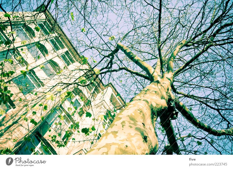 Hamburg Tree Trunk Environment Nature Sky Cloudless sky Sun Winter Beautiful weather Plant Foliage plant Town Pedestrian precinct House (Residential Structure)