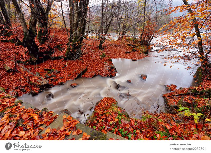 Autumn creek in hornbeam and beech forest. Autumn Colors Nature Vacation & Travel Plant Green Water Landscape Tree Red Relaxation Leaf Forest Mountain Yellow