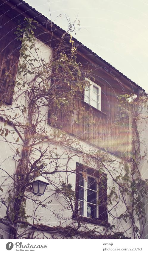 Old Plant House (Residential Structure) Wall (building) Window Wood Wall (barrier) Facade Uniqueness Village Lantern Tendril Detached house Overgrown Feral