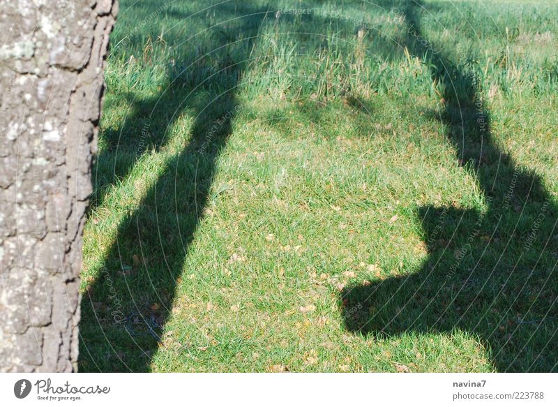 shadow life Tree Moody Colour photo Exterior shot Dawn Evening Twilight Tree trunk Structures and shapes Deserted Shadow play Meadow Grass Exceptional